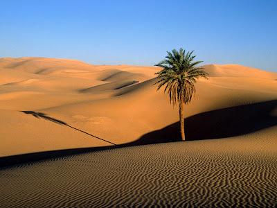 lone_palm_sahara_desert